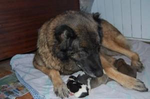 Шейла с щенами